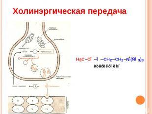 Холинэргическая передача