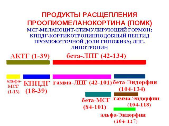ПРОДУКТЫ РАСЩЕПЛЕНИЯ ПРООПИОМЕЛАНОКОРТИНА (ПОМК)МСГ-МЕЛАНОЦИТ-СТИМУЛИРУЮЩИЙ ГОРМОН;КППДГ-КОРТИКОТРОПИНПОДОБНЫЙ ПЕПТИД ПРОМЕЖУТОЧНОЙ ДОЛИ ГИПОФИЗА; ЛПГ-ЛИПОТРОПИН