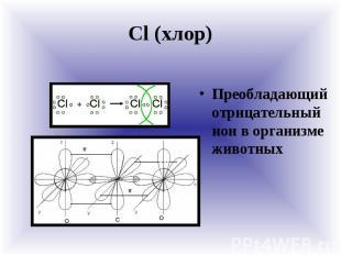 Cl (хлор) Преобладающий отрицательный ион в организме животных