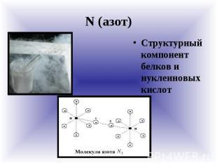 N (азот) Структурный компонент белков и нуклеиновых кислот
