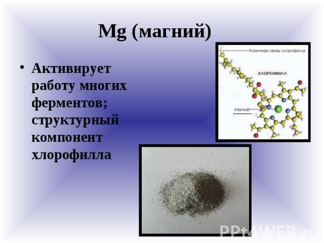 Mg (магний) Активирует работу многих ферментов; структурный компонент хлорофилла
