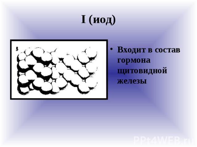 I (иод) Входит в состав гормона щитовидной железы