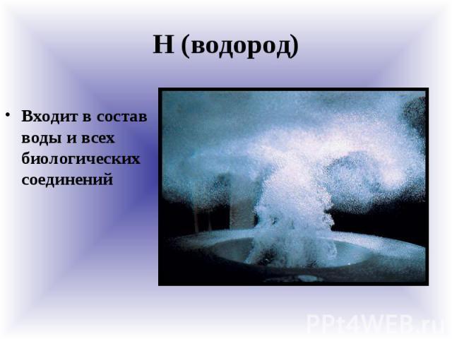 Н (водород) Входит в состав воды и всех биологических соединений
