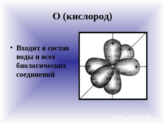 О (кислород) Входит в состав воды и всех биологических соединений