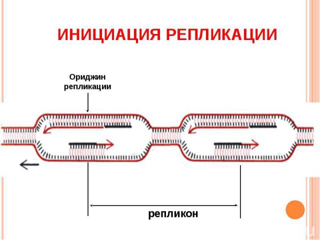 ИНИЦИАЦИЯ РЕПЛИКАЦИИ Ориджин репликации репликон