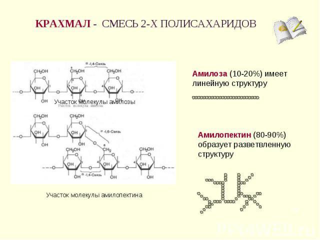 КРАХМАЛ - СМЕСЬ 2-Х ПОЛИСАХАРИДОВ Амилоза (10-20%) имеет линейную структуру Амилопектин (80-90%) образует разветвленную структуру