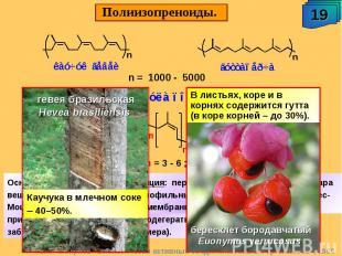 Полиизопреноиды. В листьях, коре и в корнях содержится гутта (в коре корней – до