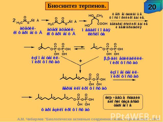 Биосинтез терпенов.