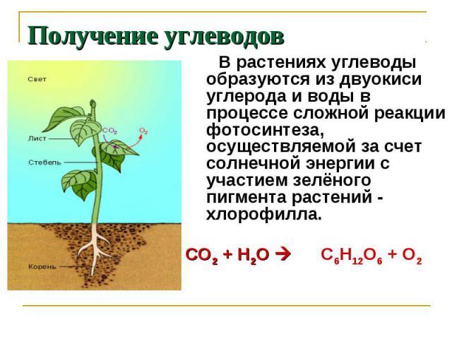 Получение углеводов В растениях углеводы образуются из двуокиси углерода и воды в процессе сложной реакции фотосинтеза, осуществляемой за счет солнечной энергии с участием зелёного пигмента растений - хлорофилла. СО2 + Н2О С6Н12О6 + О2