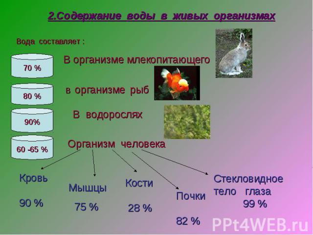 2.Содержание воды в живых организмах В организме млекопитающего В организме рыб В водорослях Организм человека Кровь90 % Мышцы 75 % Кости 28 % Почки 82 % Стекловидное тело глаза 99 %