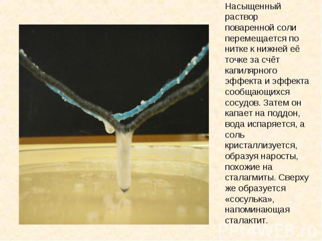 Насыщенный раствор поваренной соли перемещается по нитке к нижней её точке за счёт капилярного эффекта и эффекта сообщающихся сосудов. Затем он капает на поддон, вода испаряется, а соль кристаллизуется, образуя наросты, похожие на сталагмиты. Сверху…