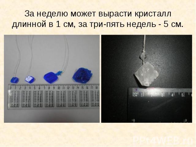 За неделю может вырасти кристалл длинной в 1 см, за три-пять недель - 5 см.