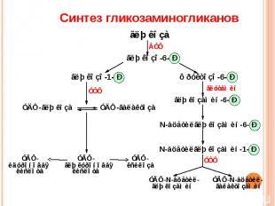 Синтез гликозаминогликанов