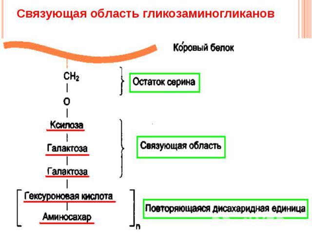 Связующая область гликозаминогликанов