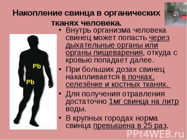 Накопление свинца в органических тканях человека. Внутрь организма человека свинец может попасть через дыхательные органы или органы пищеварения, откуда с кровью попадает далее. При больших дозах свинец накапливается в почках, селезёнке и костных тк…