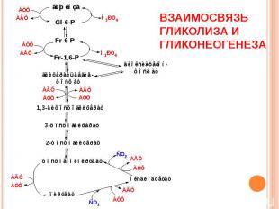 Взаимосвязь гликолиза и гликонеогенеза