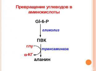 Превращение углеводов в аминокислоты
