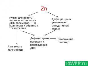 Нужен для работы энзимов, в том числе ДНК-полимераз, РНК-полимераз и обратных тр