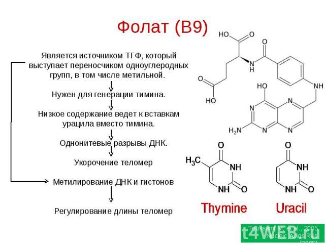 Фолат (B9) Является источником ТГФ, который выступает переносчиком одноуглеродных групп, в том числе метильной. Нужен для генерации тимина.Низкое содержание ведет к вставкам урацила вместо тимина. Однонитевые разрывы ДНК. Укорочение теломер Метилиро…
