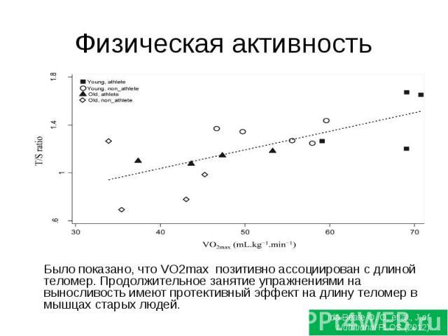 Физическая активность Было показано, что VO2max позитивно ассоциирован с длиной теломер. Продолжительное занятие упражнениями на выносливость имеют протективный эффект на длину теломер в мышцах старых людей.