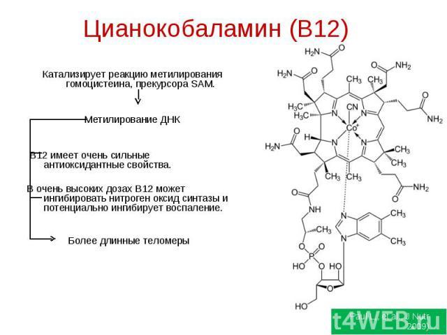 Цианокобаламин (B12) Катализирует реакцию метилирования гомоцистеина, прекурсора SAM.Метилирование ДНК B12 имеет очень сильные антиоксидантные свойства.В очень высоких дозах B12 может ингибировать нитроген оксид синтазы и потенциально ингибирует вос…
