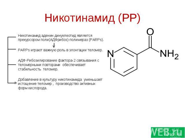 Никотинамид (РР) Никотинамид аденин динуклеотид является прекурсором поли(АДФрибоз)-полимераз (PARPs). PARPs играют важную роль в элонгации теломер. АДФ-Рибозилирование фактора-2 связывания с теломерными повторами обеспечивает стабильность теломер. …