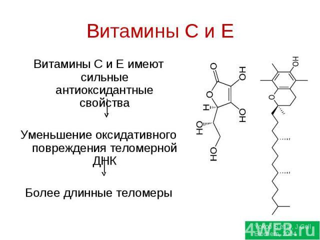 Витамины C и E Витамины С и Е имеют сильные антиоксидантные свойстваУменьшение оксидативного повреждения теломерной ДНКБолее длинные теломеры
