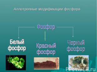 Аллотропные модификации фосфора Фосфор Белый фосфор Красныйфосфор Черный фосфор