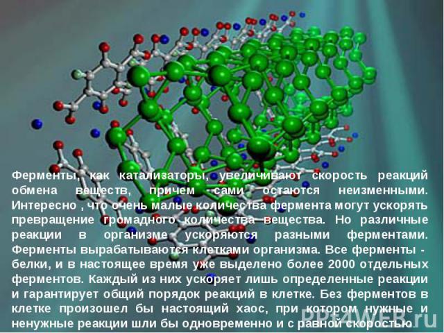Ферменты, как катализаторы, увеличивают скорость реакций обмена веществ, причем сами остаются неизменными. Интересно , что очень малые количества фермента могут ускорять превращение громадного количества вещества. Но различные реакции в организме ус…