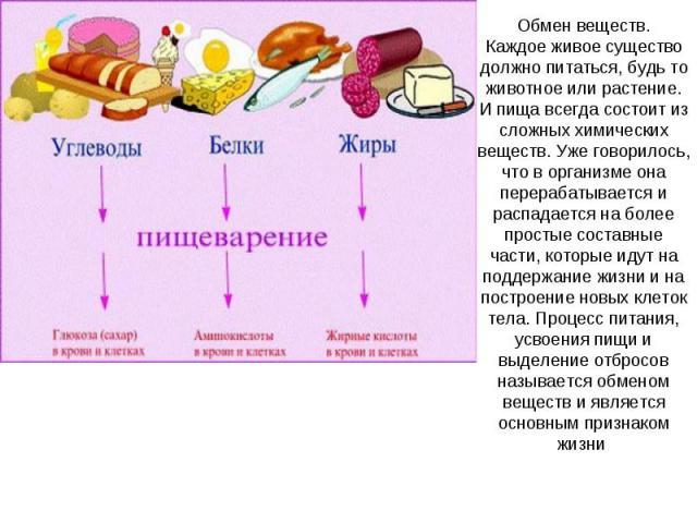 Обмен веществ.Каждое живое существо должно питаться, будь то животное или растение. И пища всегда состоит из сложных химических веществ. Уже говорилось, что в организме она перерабатывается и распадается на более простые составные части, которые иду…