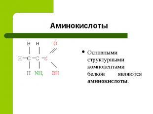 Аминокислоты H H O H C C C H NH2 OH Основными структурными компонентами белков я