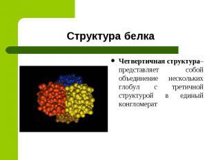 Структура белка Четвертичная структура– представляет собой объединение нескольки