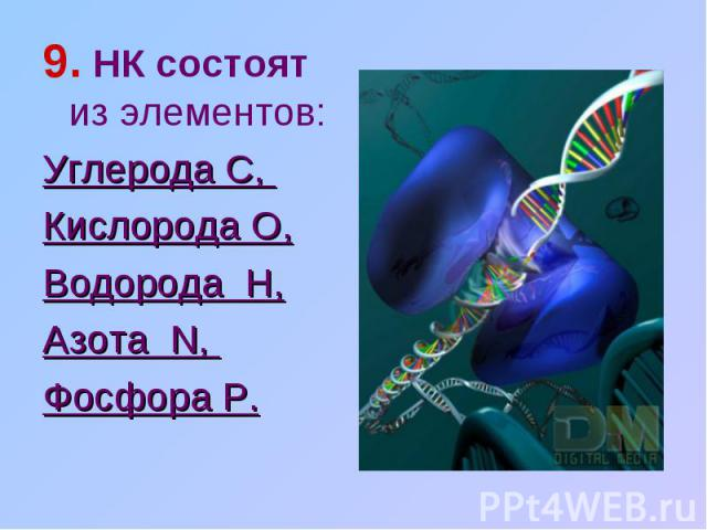 9. НК состоят из элементов: Углерода C, Кислорода O,Водорода H,Азота N, Фосфора P.