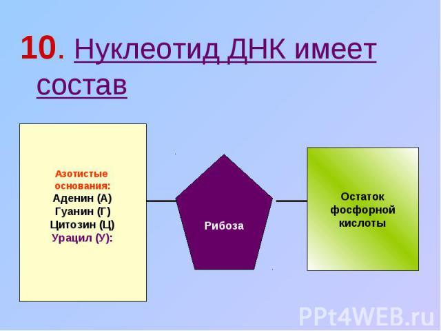 10. Нуклеотид ДНК имеет состав Азотистые основания:Аденин (А)Гуанин (Г)Цитозин (Ц)Урацил (У): Рибоза Остатокфосфорнойкислоты