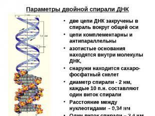 Параметры двойной спирали ДНК две цепи ДНК закручены в спираль вокруг общей осиц
