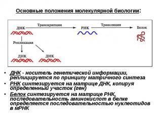 Основные положения молекулярной биологии: ДНК - носитель генетической информации