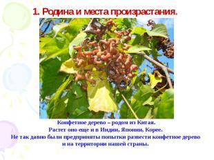 1. Родина и места произрастания. Конфетное дерево – родом из Китая.Растет оно ещ