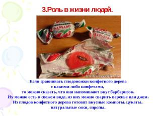 Если сравнивать плодоножки конфетного дерева с какими-либо конфетами, то можно с