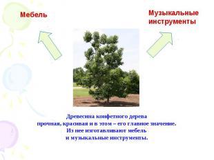 Древесина конфетного дерева прочная, красивая и в этом – его главное значение. И