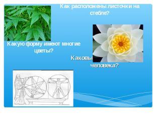 Как расположены листочки на стебле? Какую форму имеют многие цветы? Каковы пропо