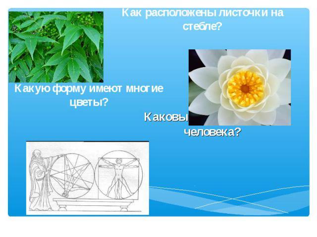Как расположены листочки на стебле? Какую форму имеют многие цветы? Каковы пропорции тела человека?