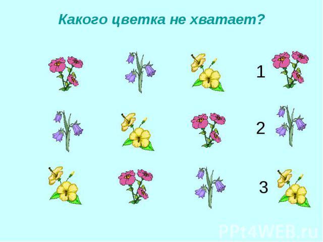 Какого цветка не хватает?