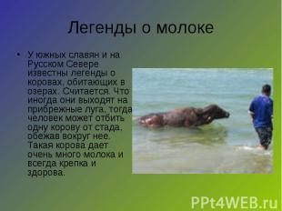 Легенды о молоке У южных славян и на Русском Севере известны легенды о коровах,