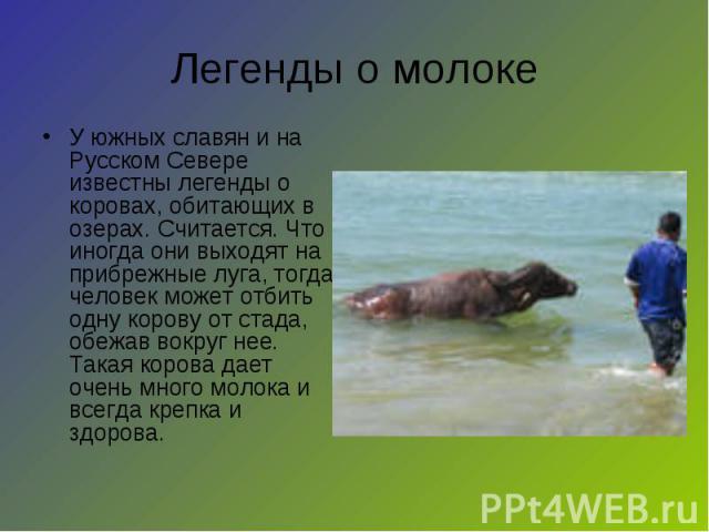 Легенды о молоке У южных славян и на Русском Севере известны легенды о коровах, обитающих в озерах. Считается. Что иногда они выходят на прибрежные луга, тогда человек может отбить одну корову от стада, обежав вокруг нее. Такая корова дает очень мно…