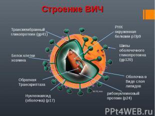 Строение ВИЧ