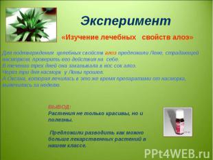 Эксперимент «Изучение лечебных свойств алоэ» Для подтверждения целебных свойств