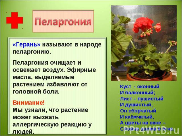 «Герань» называют в народе пеларгонию.Пеларгония очищает и освежает воздух. Эфирные масла, выделяемые растением избавляют от головной боли. Внимание!Мы узнали, что растение может вызвать аллергическую реакцию у людей. Куст - оконныйИ балконный;Лист …