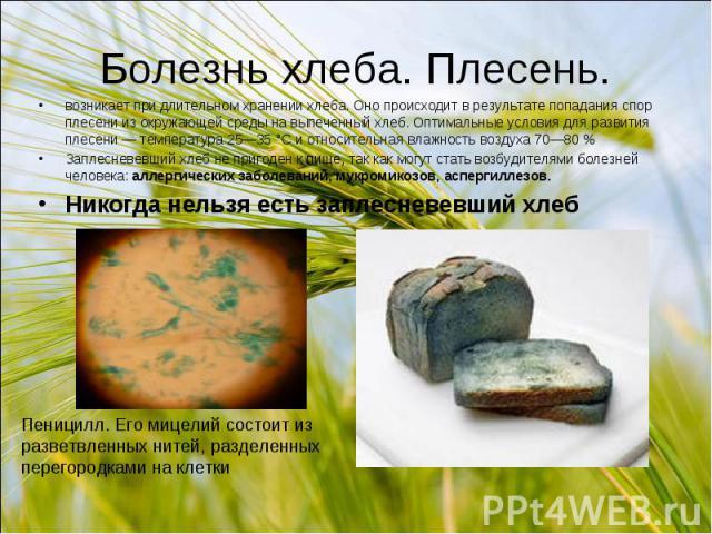 Болезнь хлеба. Плесень. возникает при длительном хранении хлеба. Оно происходит в результате попадания спор плесени из окружающей среды на выпеченный хлеб. Оптимальные условия для развития плесени — температура 25—35 °С и относительная влажность воз…