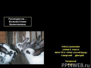 Исследовательская работа «Кролики» Руководитель – Волкова Елена Валентиновна Раб