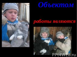Объектом Объектом работы являются эти кролики.